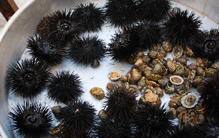 just cough fresh sea urchin